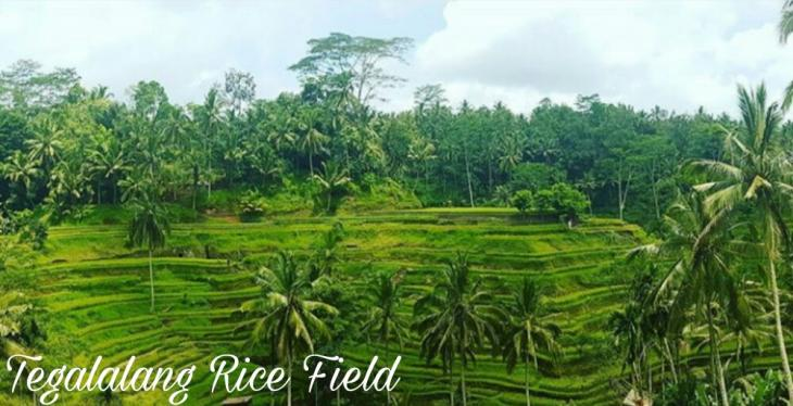 Ubud & Kintamani Tour